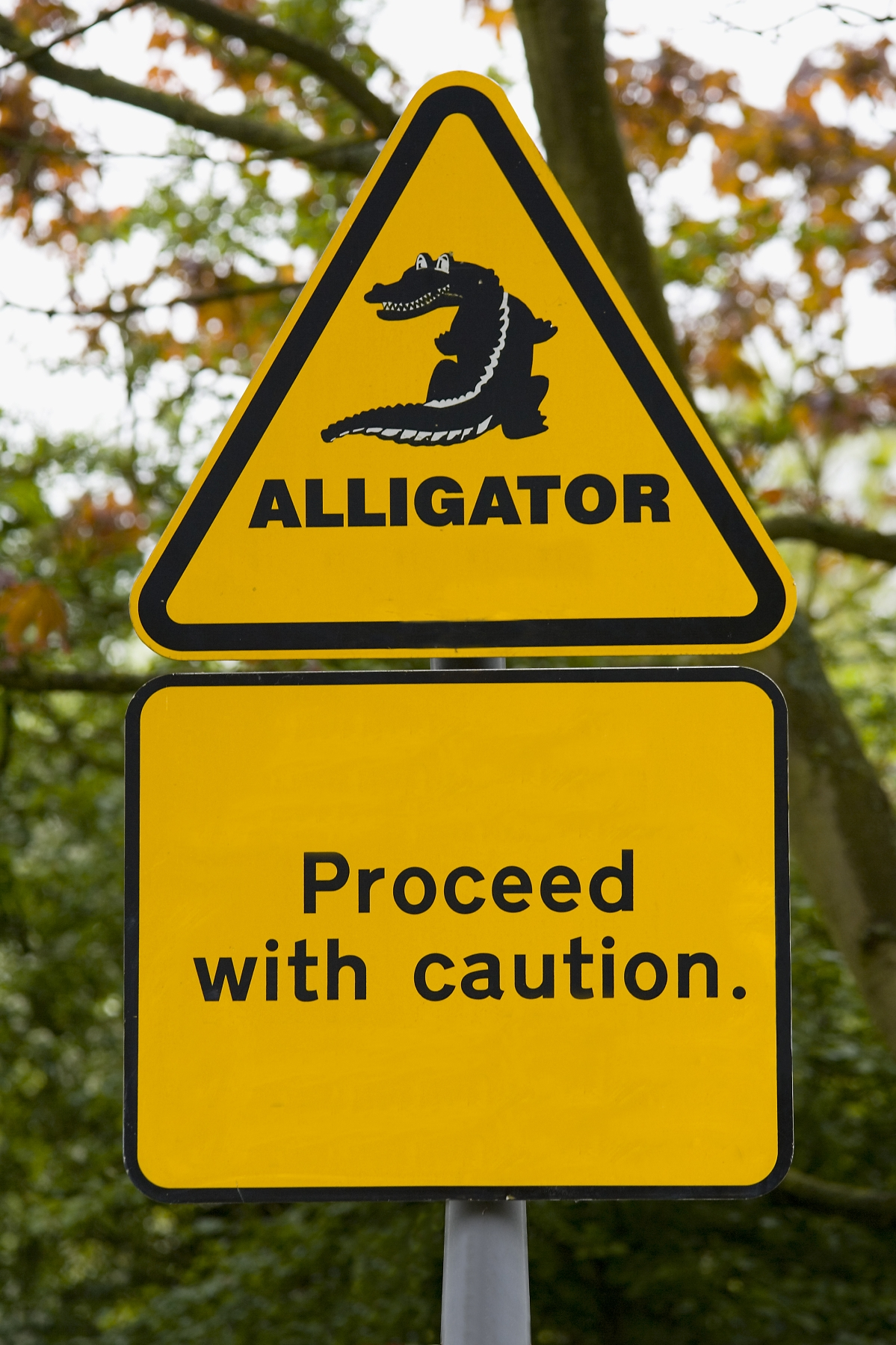 Real Estate Term of the Day : Alligator Property